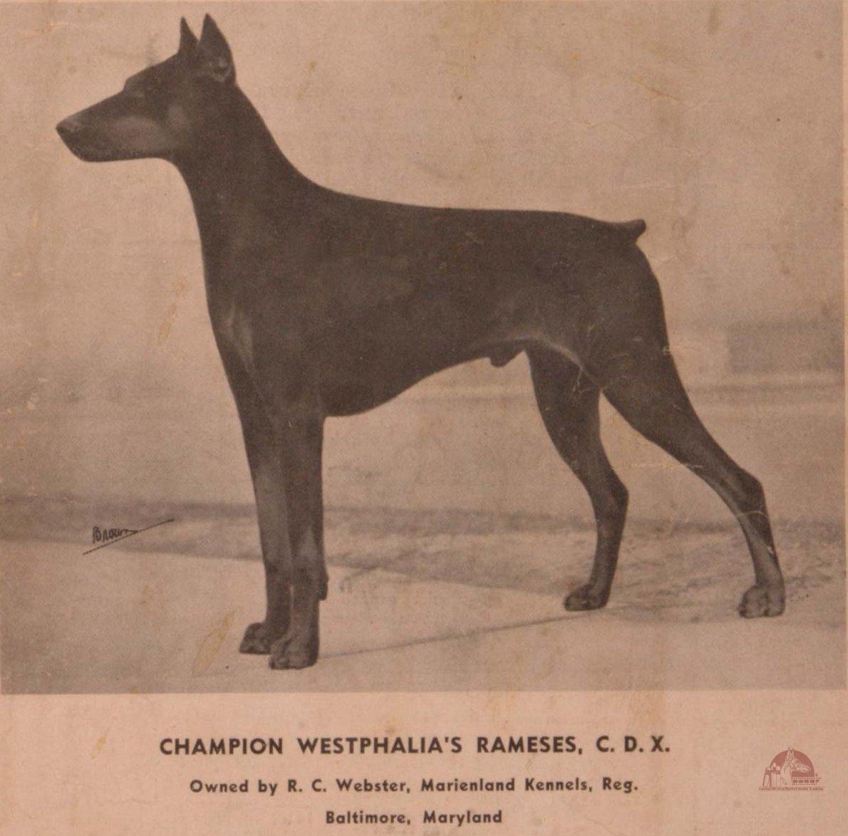 Westphalia's Ramses